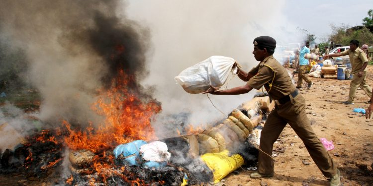 Indian police throw blocks of confiscated marijuana onto a bonfire as they incinerate some 4250 kilos of the drug, which was according to authorities worth about 7 million Indian rupees in Agartala Image Credit: Northeast Now