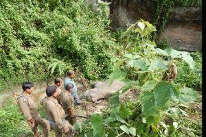 Dead elephant near NRL boundary wall