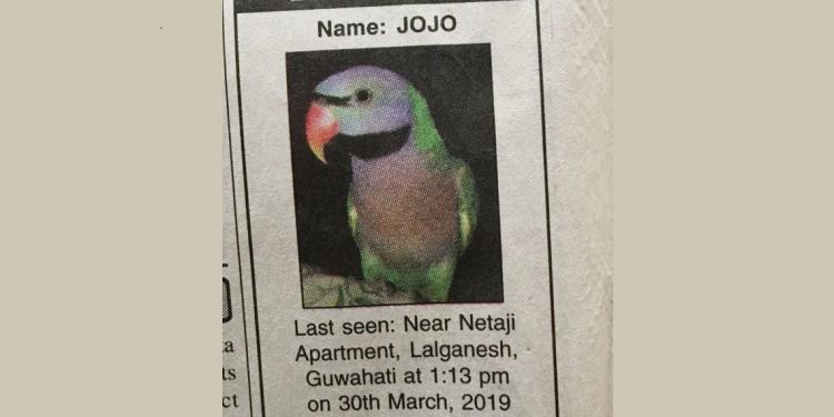 Newspaper ad of parrot lost in Guwahati