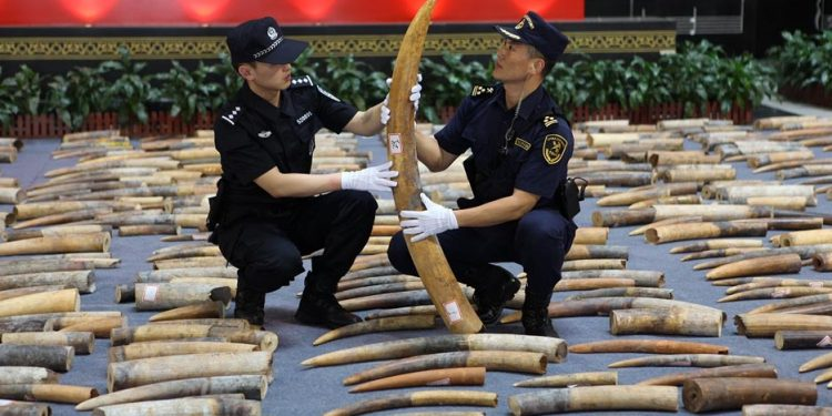 Ivory seized in China