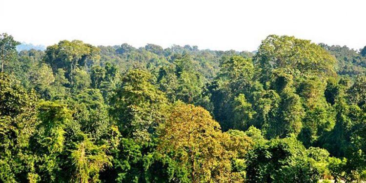 Assam forest
