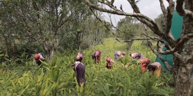 Meghalaya farmers