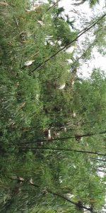 goalpara birds
