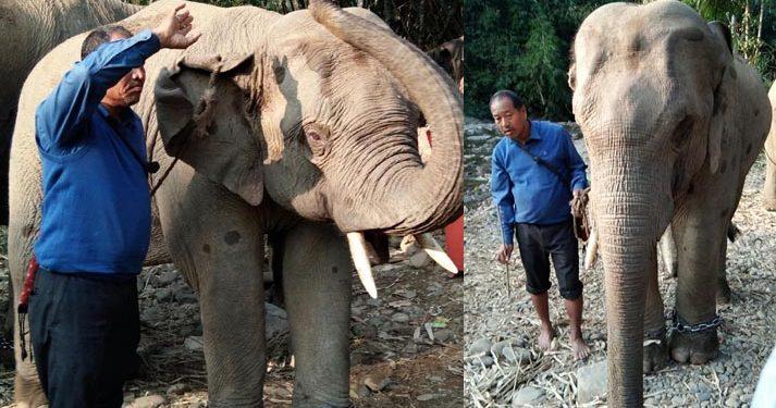 Babulal - elephant