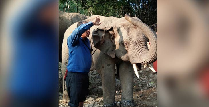 "Fear of deaths make Gujarat journey ""edgy"" for Assam elephants 1"