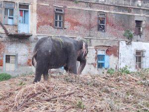 Assam: Vana Mahotsav – Its essence and importance 5