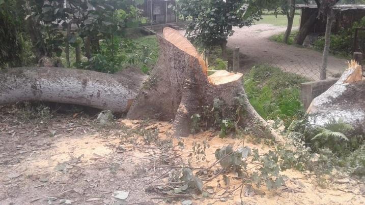 Assam: Bird hunting, tree felling jolt Lakhimpur on World Environment Day 1