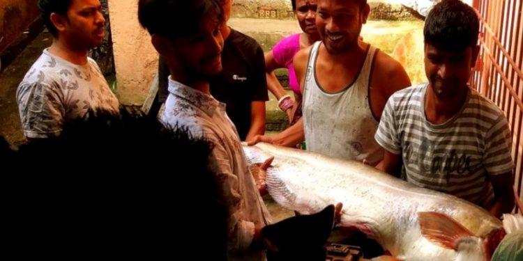 borali fish