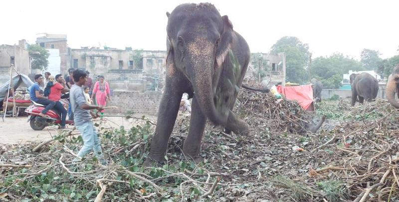 Why is Gujarat so fascinated with Assam elephants? 5