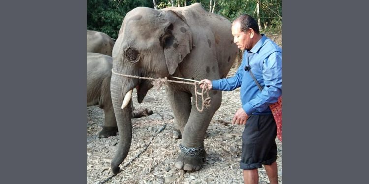 Babulal the elephant