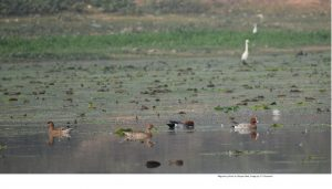 Assam: Vana Mahotsav – Its essence and importance 4