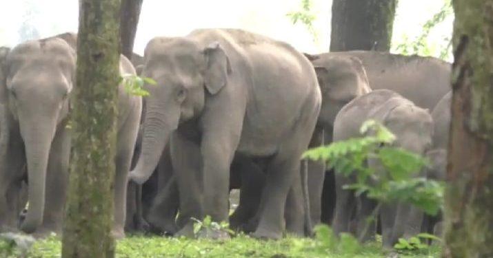 udalguri elephant