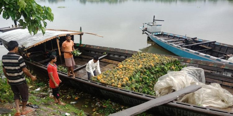 Pineapples being loaded on boat. Image credit - Northeast Now