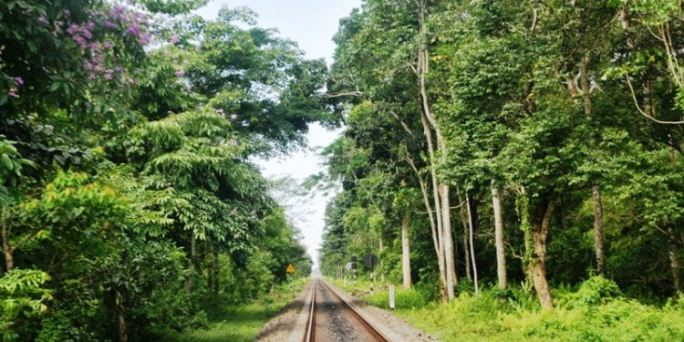 Canopy bridge in Gibbon Wildlife Sanctuary
