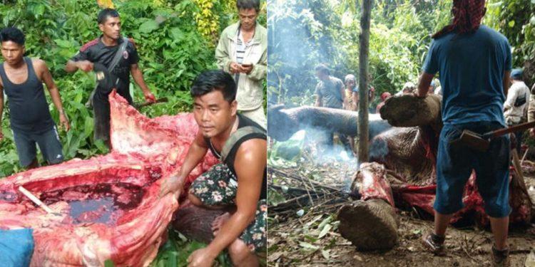 Feast on dead elephant