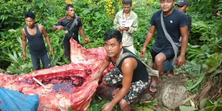 """Project Elephant of MOEF&CC takes cognizance of """"mysterious death"""" of elephant in Mizoram 1"""