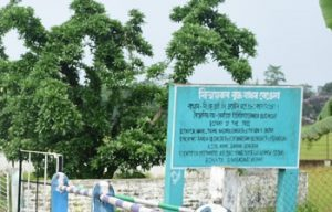 Assam: Mystical 580 years old tree of Sivasagar calls for more attention 1