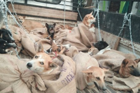 After feasting on elephant, people of Mizoram vilified for trying to slaughter 36 dogs 1