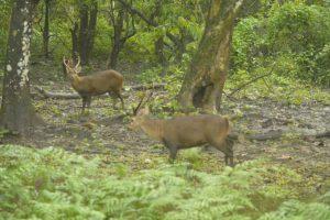 Assam: Forest officials survey flood devastated Orang National Park 2