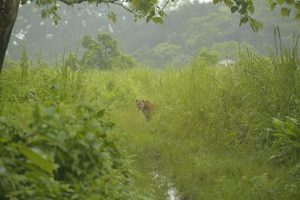 Assam: Forest officials survey flood devastated Orang National Park 1