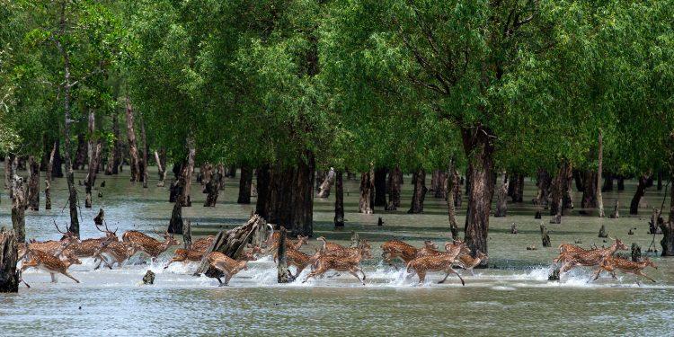 Sundarbans in Bangladesh