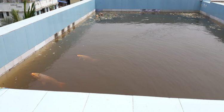 Amarjyoti Kashyap's rooftop pond