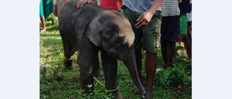 The rescued baby elephant