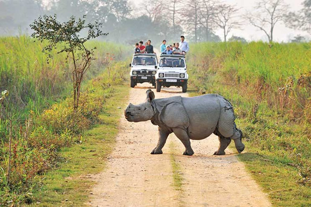 Why is Kaziranga National Park so famous? 1