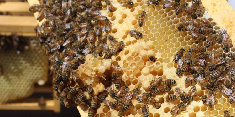 Northeast's first honey bee integrated development centre