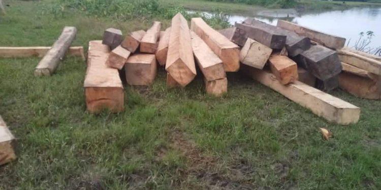 Timber seize Lakhimpur