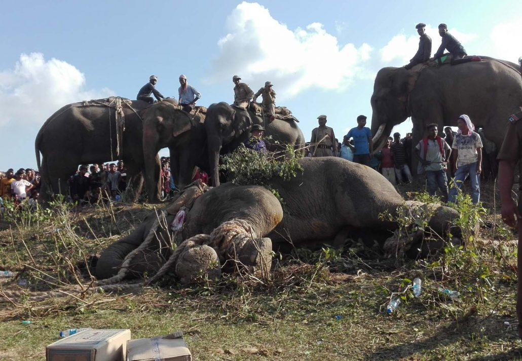 Assam CM lauds MLA Padma Hazarika for capturing wild jumbo 1