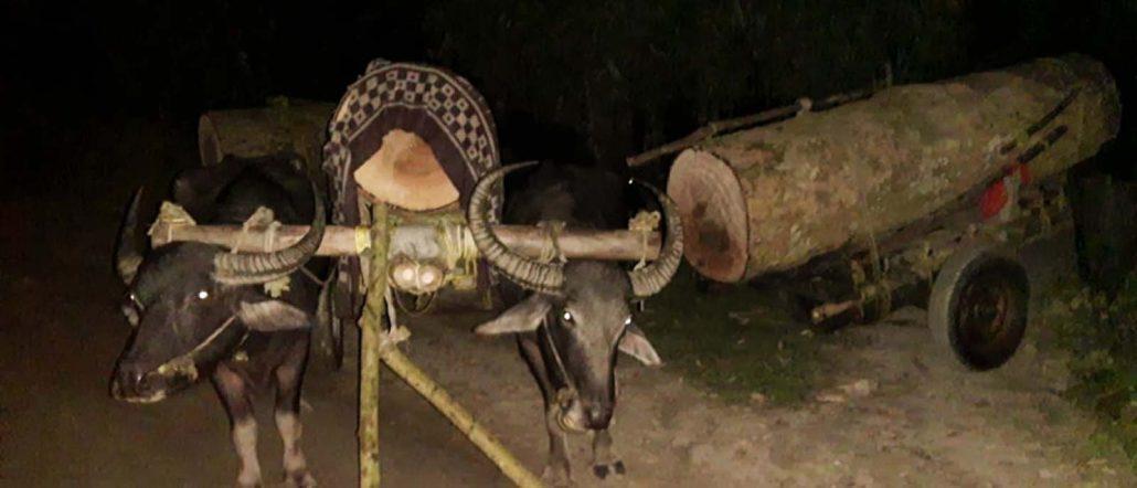 Assam: Valuable logs seized in Kokrajhar & Chirang 2