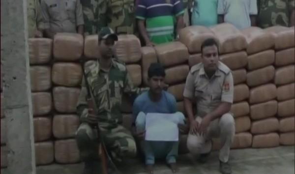 Tripura: Cannabis worth over Rs 70 lakh seized 1