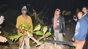 Tripura CM apprehends timber smugglers 2