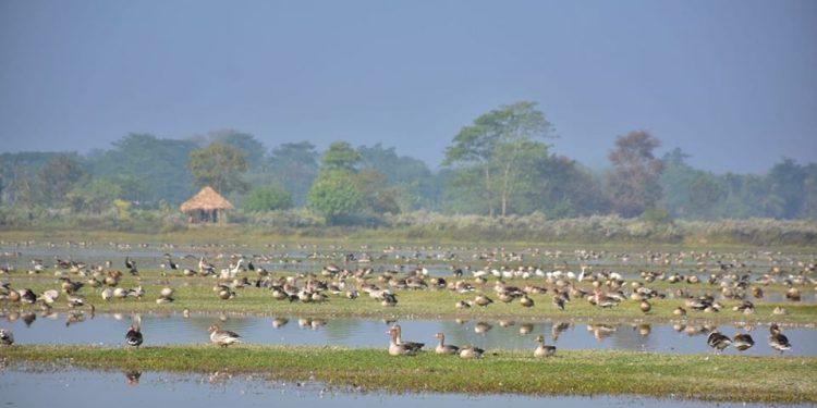 A view of Pohugarh in Assam's Sivasagar. Image courtesy: Madhab Das