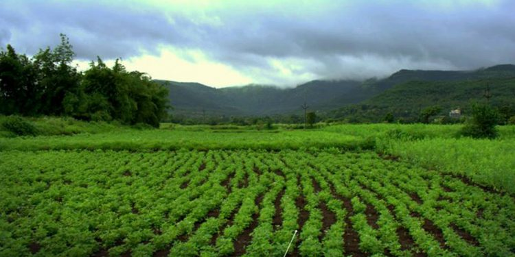 Agri field