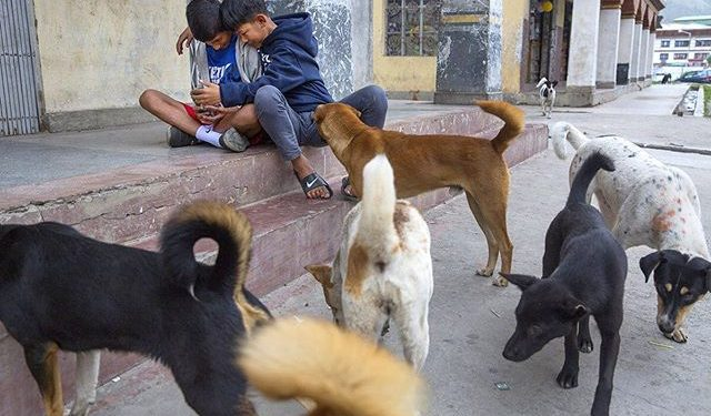 Growing dog population has created serious problems in Bhutan.