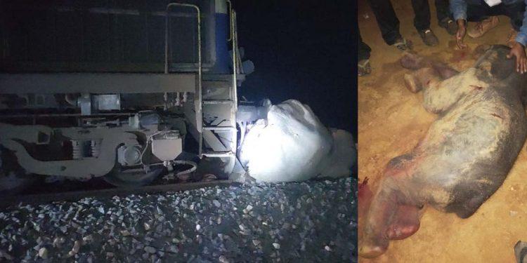 Elephant killed in Lumding