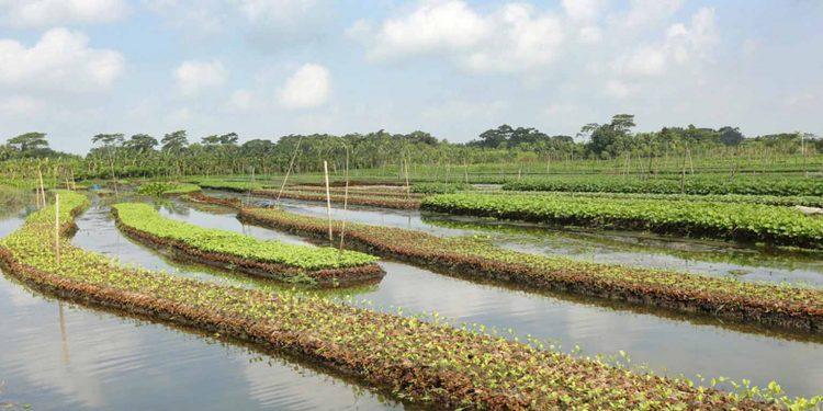 Floating gardens in Bangladesh. Image credit: Dhaka Tribune