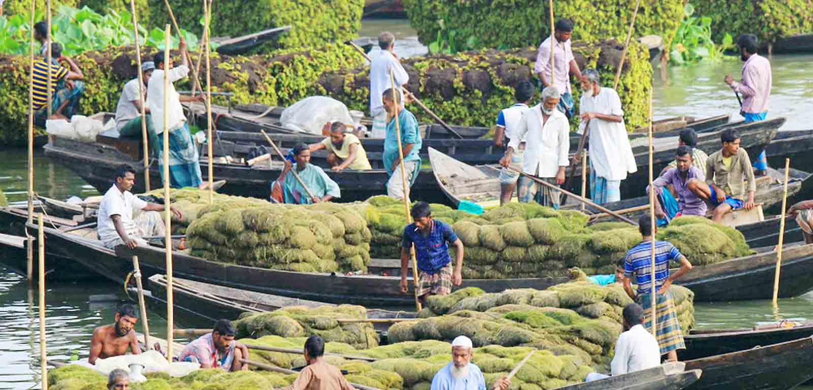 Floating gardens for the landless farmers of Bangladesh 4