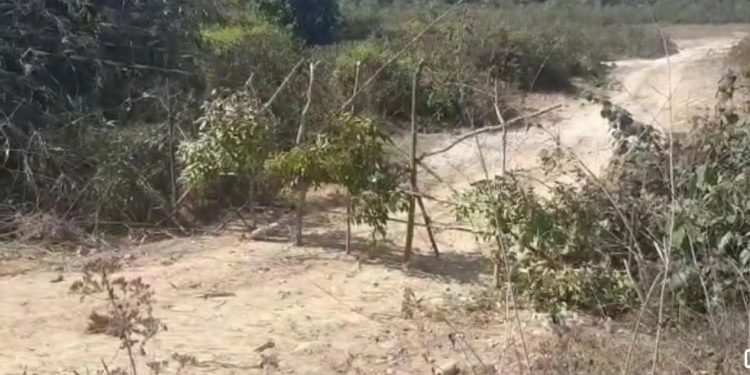 Dullung Reserve Forest along Assam-Arunachal Pradesh border. (file image)