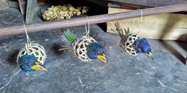 Birds for sale in Tamenglong
