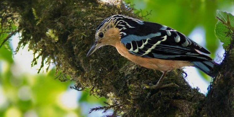 66 bird species in Northeast threatened with extinction 1