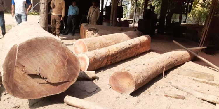 Seized illegal timbers