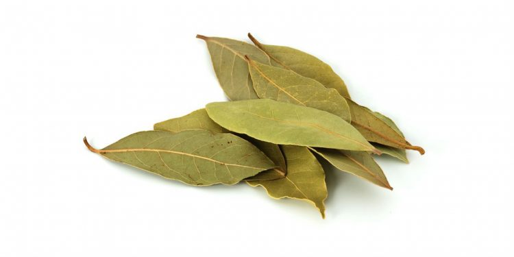 Bay leaves. Image credit: The Spruce Eats