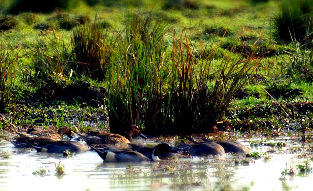 Wetland and biodiversity 1