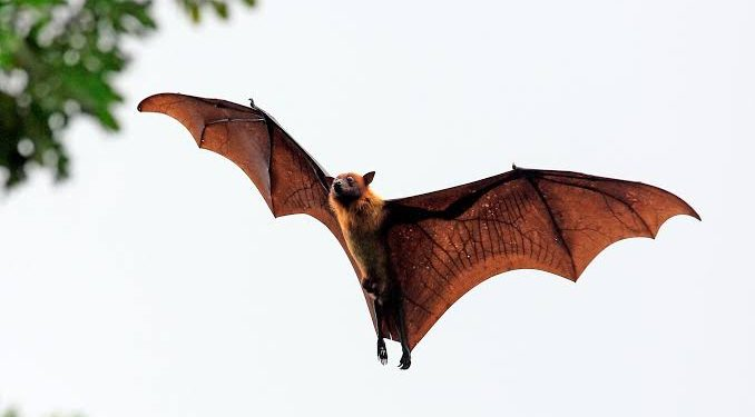 Wuhan's study of Nagaland bat populations to be probed