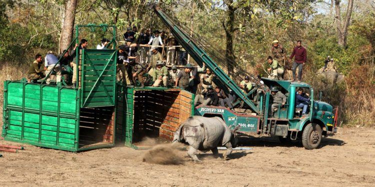 Rhinos released at Manas National Park