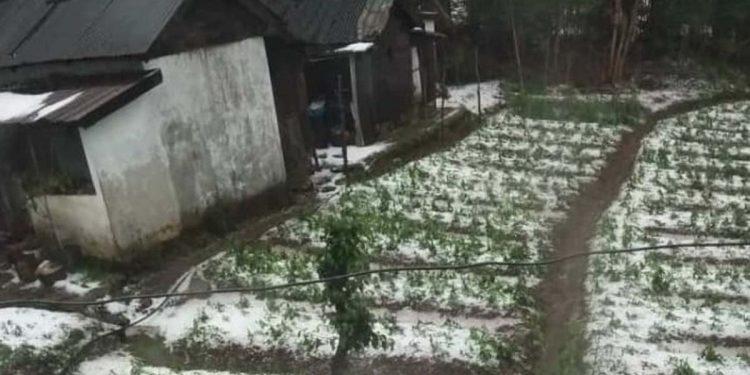 Hailstorm at Lailynkot, 50 km from Shillong