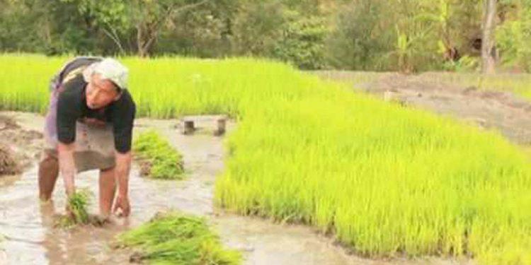 Nagaland farmers